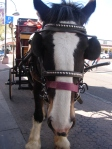 Free stagecoach rides.