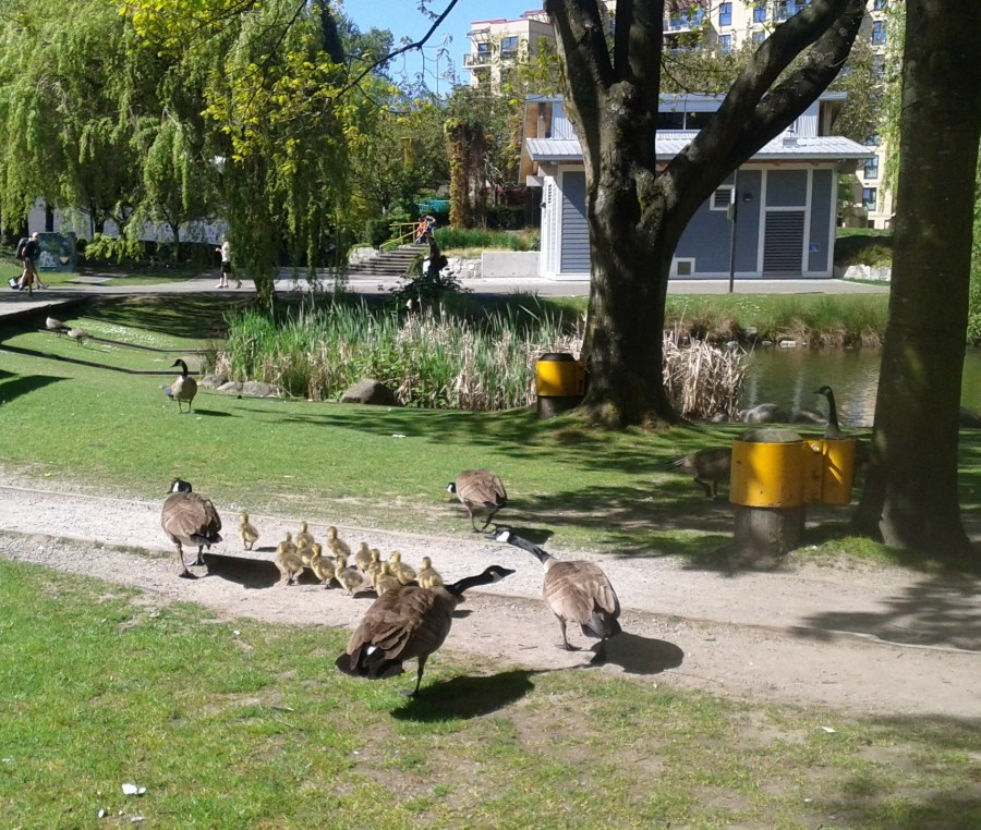 New Flock at Granville Island