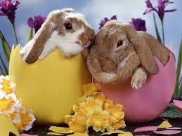 Rabbits really do hatch.