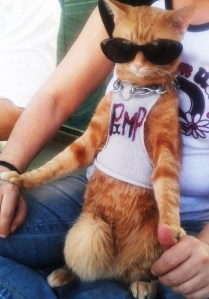 Cool as a CAT