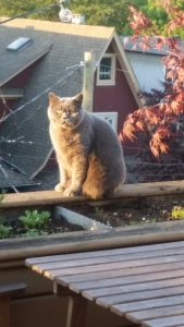Cat on a warm wood ledge