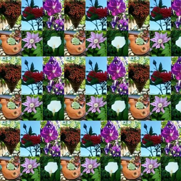 Kaleidoscope of flowers - taken from a freinds garden.