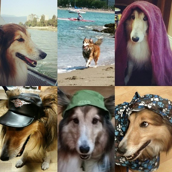 Jia Jia the Wonderdog - Part #2