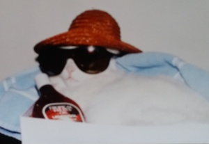 I took this pic of our family cat Frosty a long time ago.  He loved to borrow my sunglasses.     As you can see he took precautions in the sun.  We can learn something from Frosty the cat.