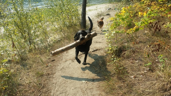 Hugo found a stick