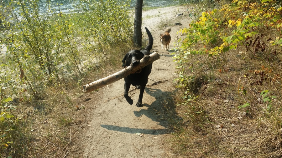 Hugo found a stick