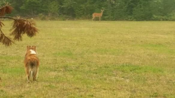Jia Jia found a deer