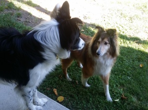 Taylor (1 1/2 yr. old Border Collie) & Jia Jia - Prospect Lake.