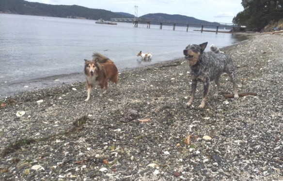 Dogs enjoying the freedom to run around Piers Island