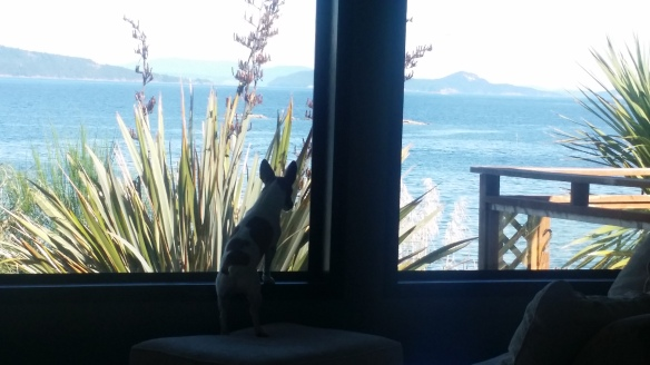 Jack enjoying the view from his living room - waiting for the boat to arrive with more supplies