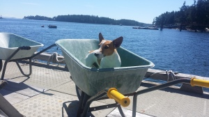 I tried to load one more little thing from the wheel barrel to the boat....looks like I'll have to wait.