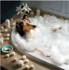 While I take another bubble bath...with a bubbly in hand. Wait a sec...that's not even me - it's my dog! Get outta the tub.