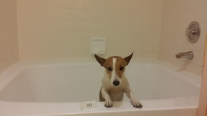 yeah, you really need that bath
