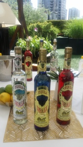 tequilasafari8