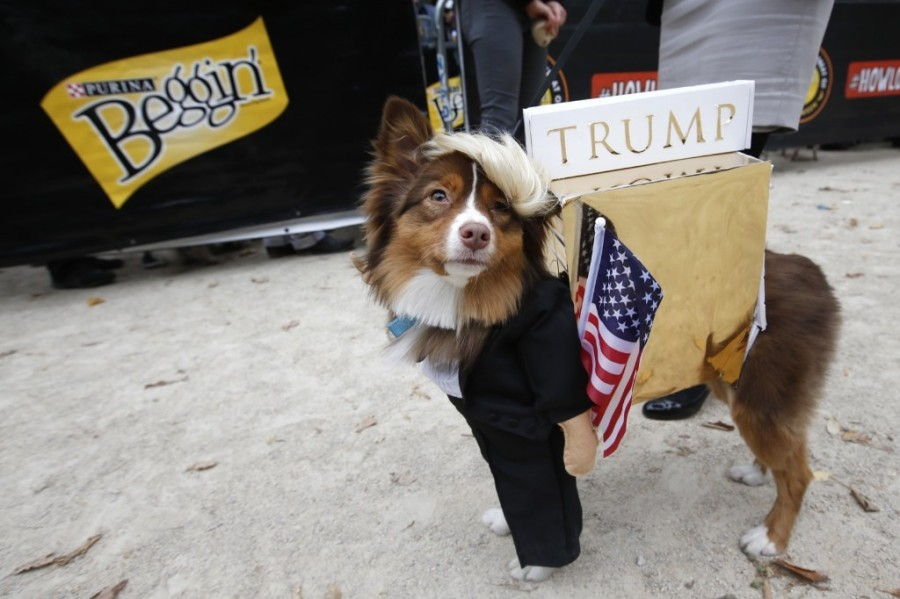Ruby, an Australian Shepherd-mix proudly struts her alter ego as Donald Trump at the Tompkins Square Halloween Dog Parade. Jason DeCrow/Invision for Purina Beggin'/AP Images