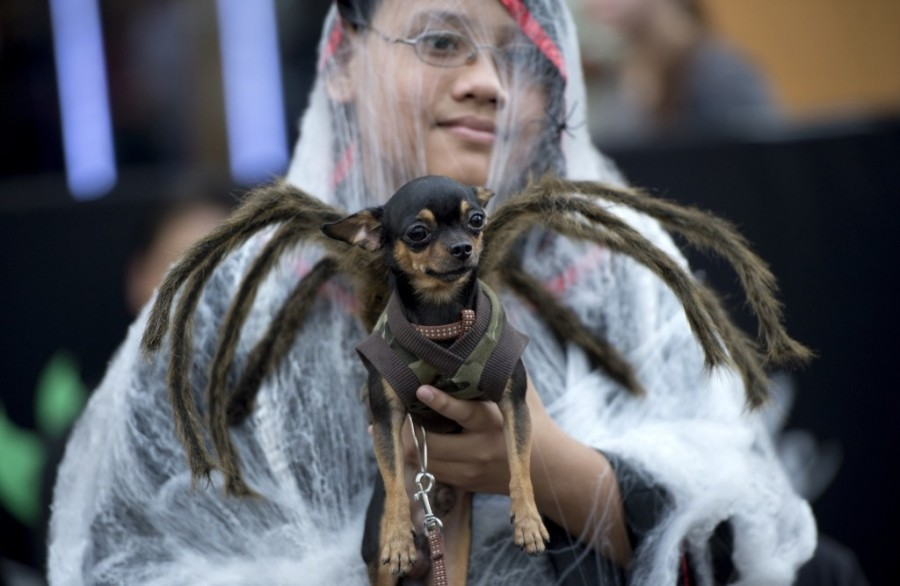 A child holds a dog dressed in a spider costume during the Cats and Dogs Halloween costume competition in Manila. NOEL CELIS/AFP/Getty Images