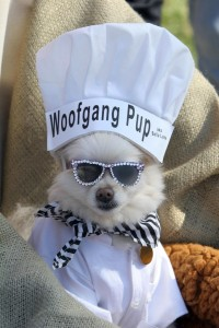 Bella Luna, a Pomeranian, is dressed as a chef at a Halloween costume parade in Long Beach, Calif. ROBYN BECK/AFP/Getty Images