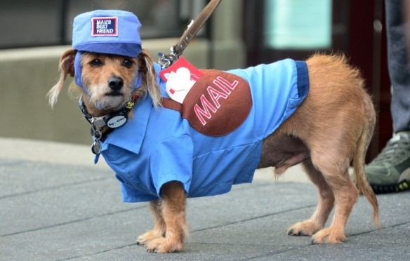 Daschund-Terrier mix Robin, dressed as a 'Mailman' in Old Town Pasadena. FREDERIC J. BROWN/AFP/Getty Images