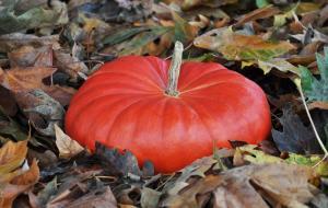pumpkinscinderella