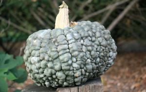 pumpkinsgreengoblin
