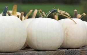 pumpkinsmoonshine