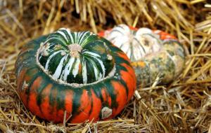 pumpkinturks