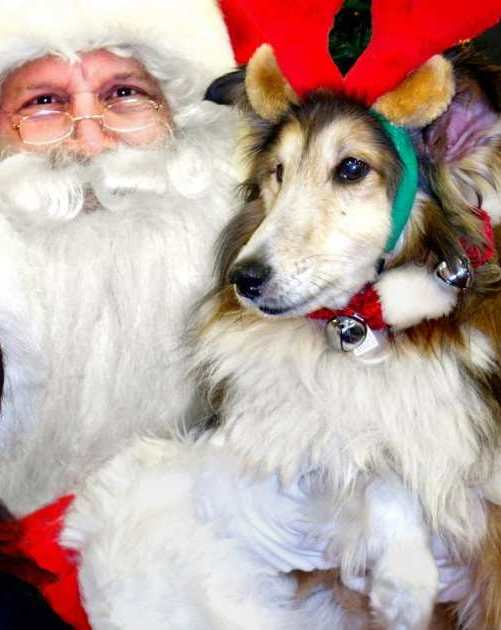 Love On A Leash's Tammy Preast and Frank Dueck held a benefit for the Dhana Metta Rescue Society where, at age 14, Sheltie Jia Jia may have been a little old to still believe in Santa Claus. MALCOLM PARRY / PNG