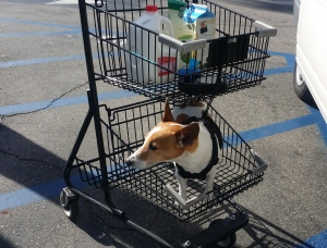 He loves to go shopping. His favorite grocery aisle is the meat department.