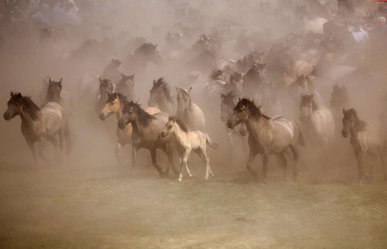 Rabid Horses In Germany! - HD1600×1029